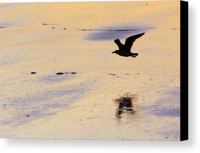 Maine Canvas Print featuring the photograph Early Morning Flight by Rick Berk