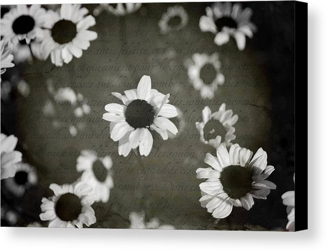Flowers Canvas Print featuring the photograph Even In Darker Days by Laurie Search
