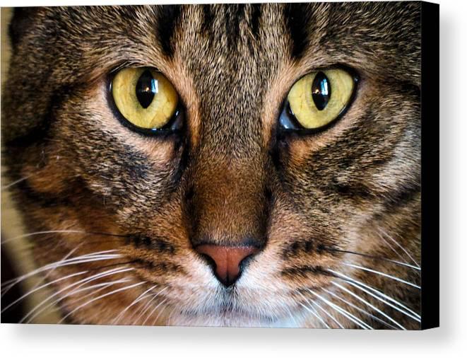 Cat Canvas Print featuring the photograph Face Framed Feline by Art Dingo