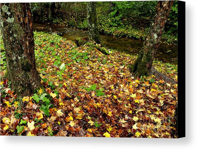 Williams River Canvas Print featuring the photograph Fall Along Middle Fork by Thomas R Fletcher
