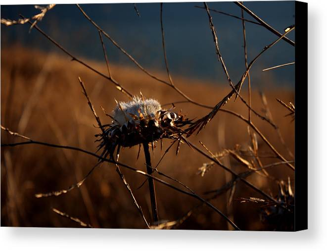 Macro Canvas Print featuring the photograph Fall Flower by Leonard Sharp