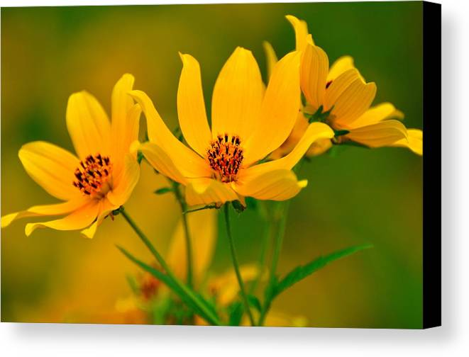 Flowers Canvas Print featuring the photograph Falls Glory by Marty Koch