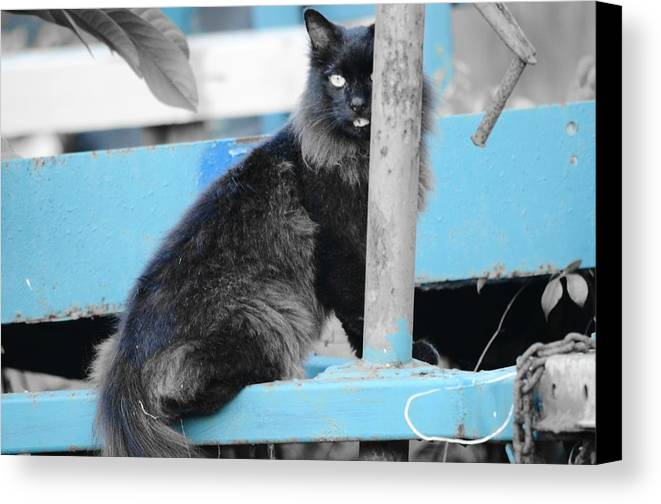 Wagon Canvas Print featuring the photograph Farm Kitty On Blue Wagon by Wibada Photo