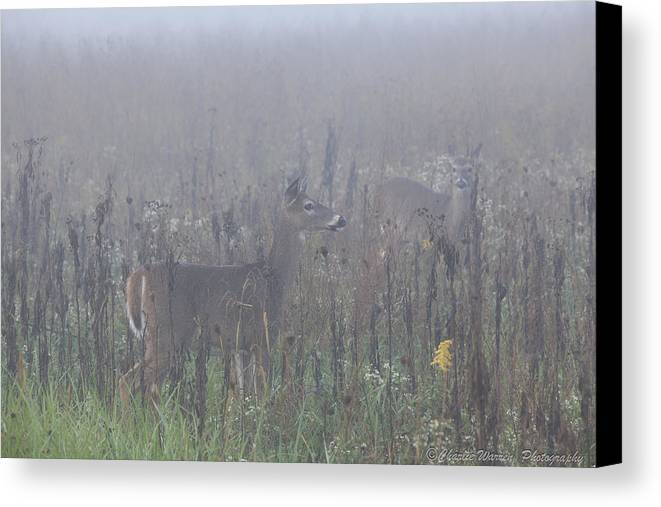 Fawns Canvas Print featuring the photograph Fawn At Dawn by Charles Warren