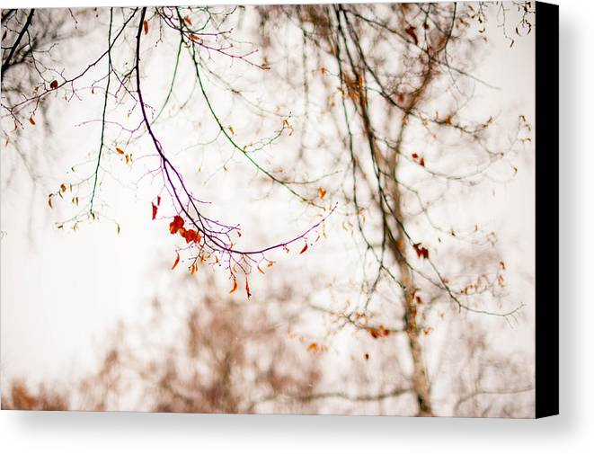 Snow Canvas Print featuring the photograph First Snow. Touch Of Gold by Jenny Rainbow