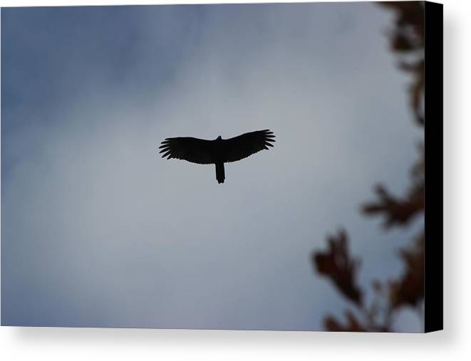 Turkey Buzzard Canvas Print featuring the photograph Flight Above The Trees by Charlene Gretsch