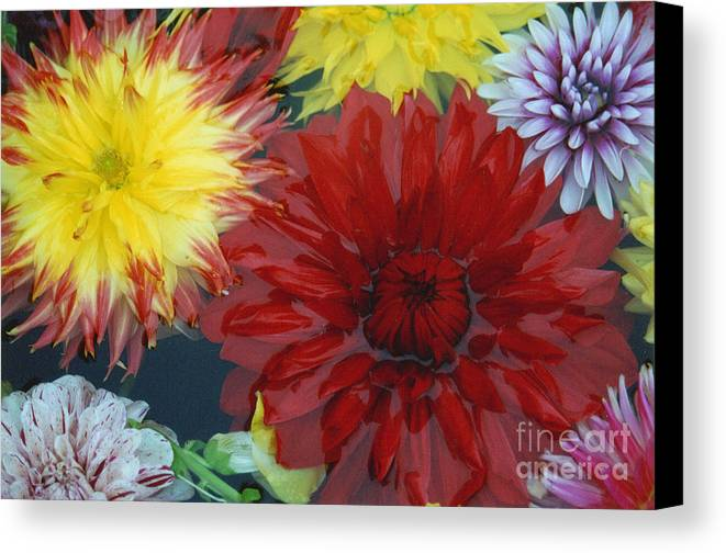 Flowers Canvas Print featuring the photograph Floating by Bruce Borthwick