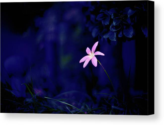 Horizontal Canvas Print featuring the photograph Flower by Moaan