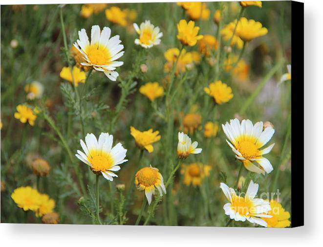Landscape Canvas Print featuring the photograph Flowers by Sindhu