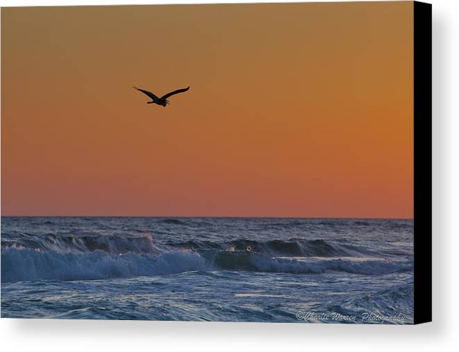 Beach Canvas Print featuring the photograph Fly By by Charles Warren
