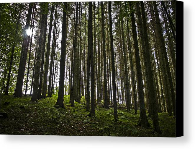 Forrest Canvas Print featuring the photograph Forrest Sun by Peter Emil Andersen