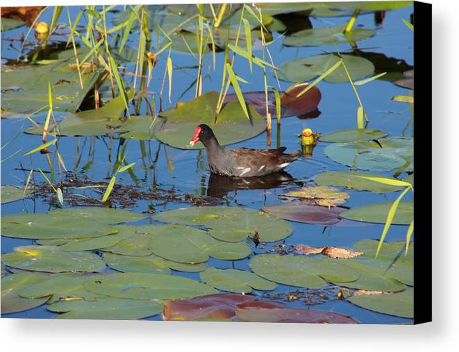 Fowl Canvas Print featuring the photograph Fowl by Mike Wilber