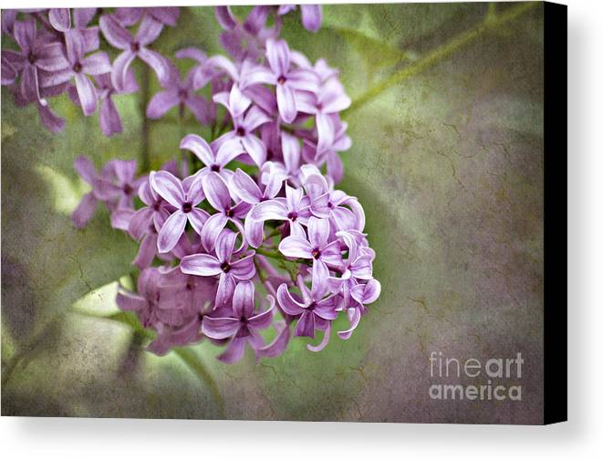 Lilac Canvas Print featuring the photograph Fragrant Purple Lilac by Cheryl Davis