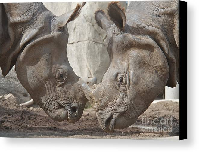 Rhino Canvas Print featuring the photograph Friend Or Foe by Jason Waugh
