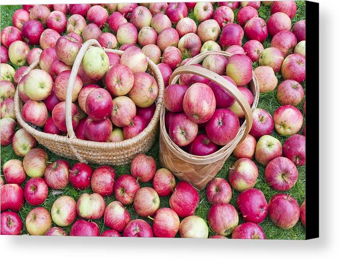 Apples Canvas Print featuring the photograph Fruits by Aleksandr Volkov