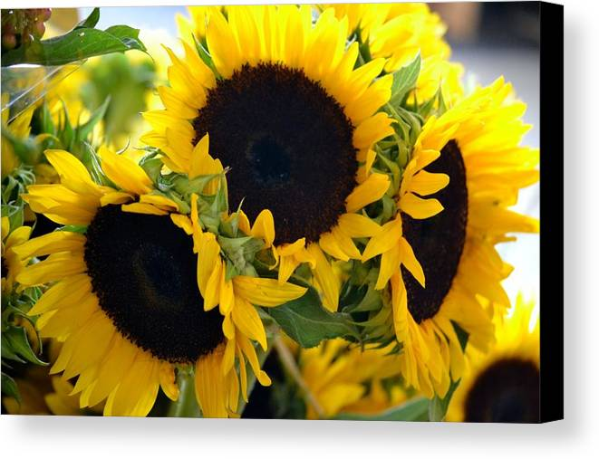Sunflower Canvas Print featuring the photograph Glow by Monica Lyons