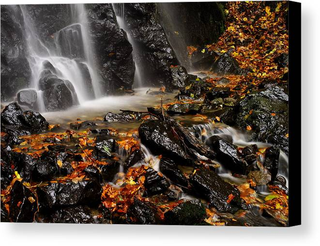 Beauty Canvas Print featuring the photograph Glowing by Ivan Slosar