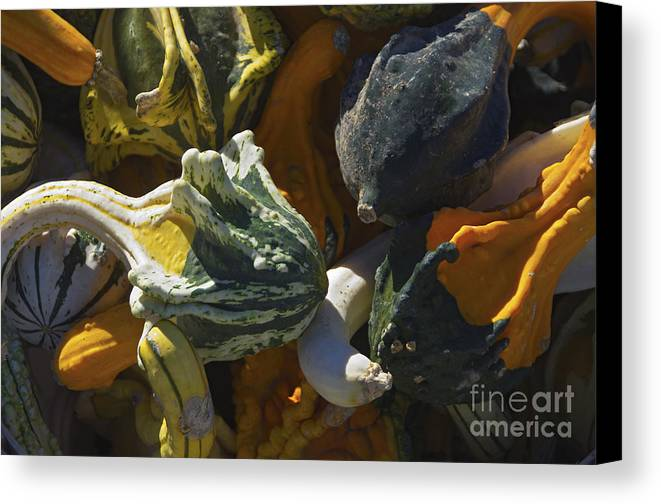 Gourd Canvas Print featuring the photograph Gourds No.1 by Scott Evers