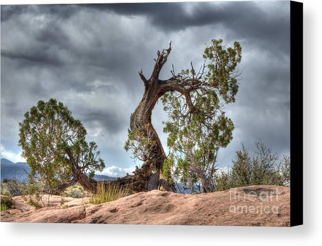 Grand Canyon Canvas Print featuring the photograph Grand Canyon Facing The Storm by Bob Christopher