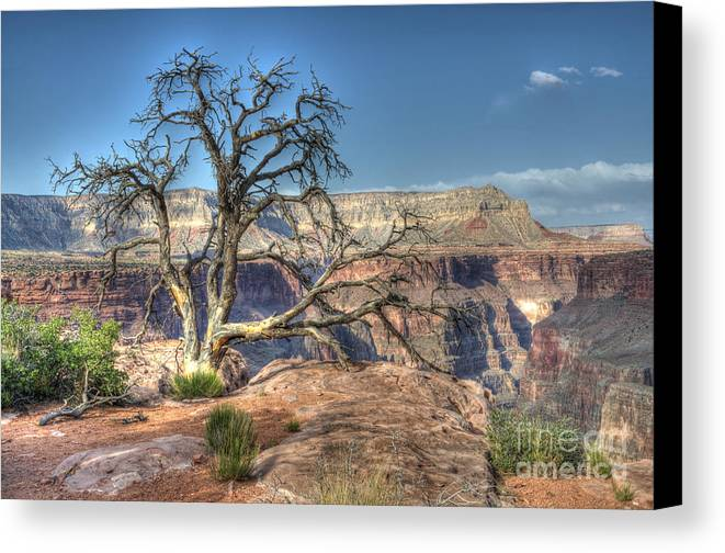 Grand Canyon Canvas Print featuring the photograph Grand Canyon Tree At Toroweap by Bob Christopher