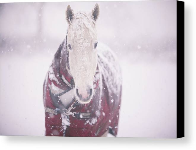 Horizontal Canvas Print featuring the photograph Grey Pony In Red Rug by Sasha Bell