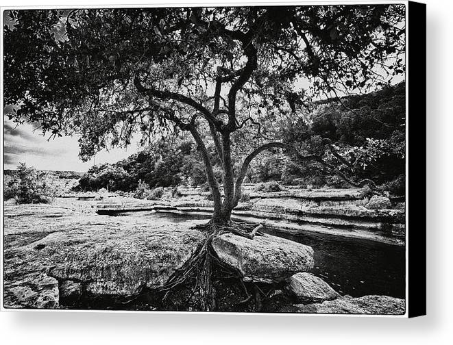 Still Life Canvas Print featuring the photograph Grown Into The Rock by Lisa Spencer
