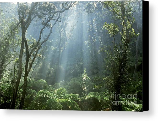 Plant Canvas Print featuring the photograph Hawaiian Rainforest by Gregory Dimijian MD
