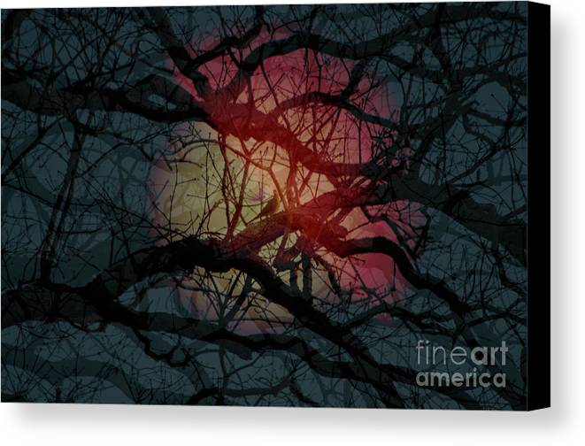 Trees Canvas Print featuring the photograph Hedge2 by Affini Woodley