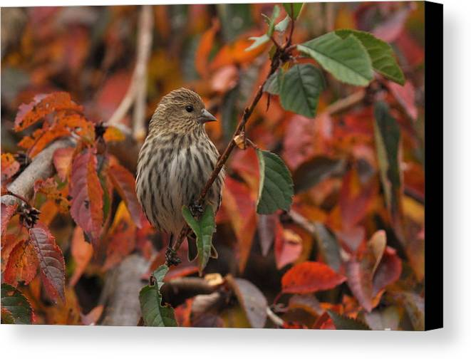 Fall Foliage Canvas Print featuring the photograph Hiding In Plain Sight by Deborah Bifulco