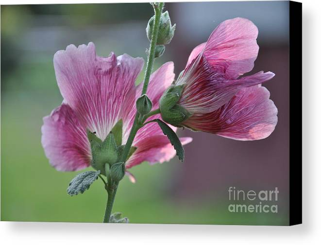 Flower Canvas Print featuring the photograph Hollyhocks by Tamera James