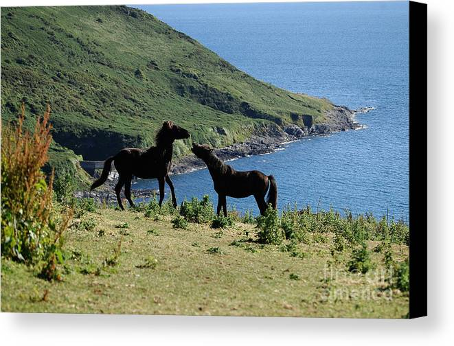 Horse Canvas Print featuring the photograph Horses By The Sea by Rob Hawkins