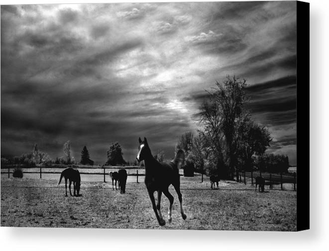 Beautiful horses canvas print featuring the photograph horses running black white surreal nature landscape by kathy