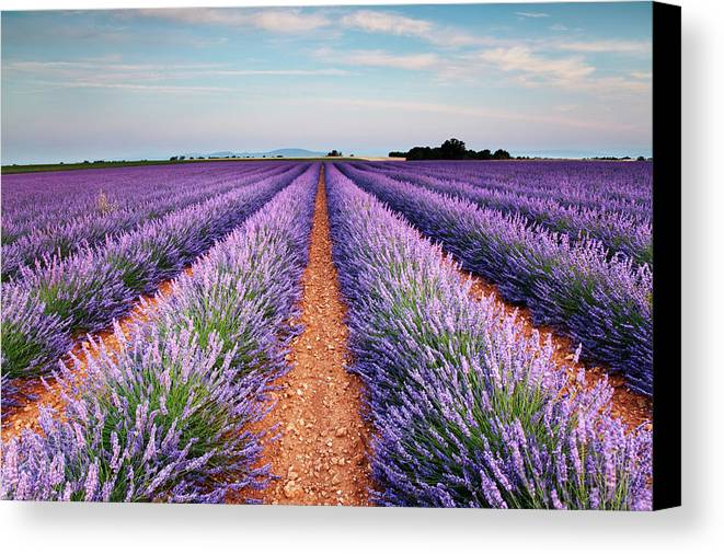 Horizontal Canvas Print featuring the photograph Lavender Field In Blossom by Matteo Colombo