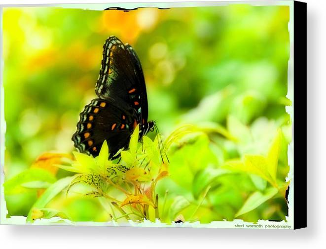 Yellow Canvas Print featuring the photograph Lemon Lime Butterfly by Sheri Bartoszek