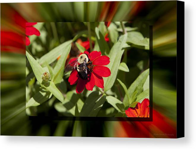 Flower Canvas Print featuring the photograph Let It Bee by Charles Warren