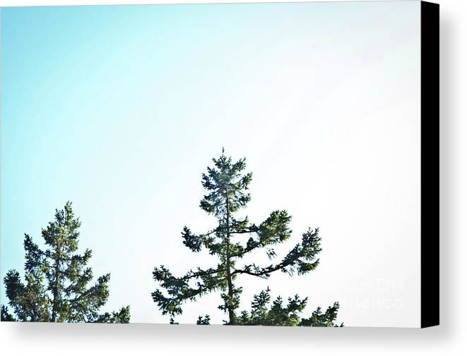 Landscape Canvas Print featuring the photograph Looking On by Christine Redmond