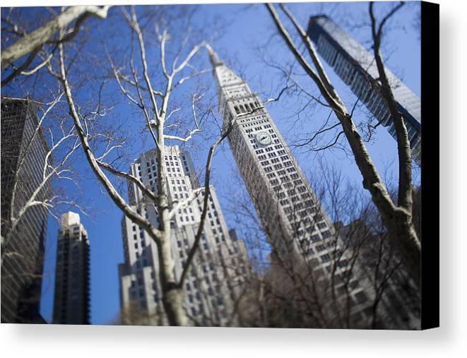 Photography Canvas Print featuring the photograph Looking Up Through Trees At Skyscrapers by Axiom Photographic