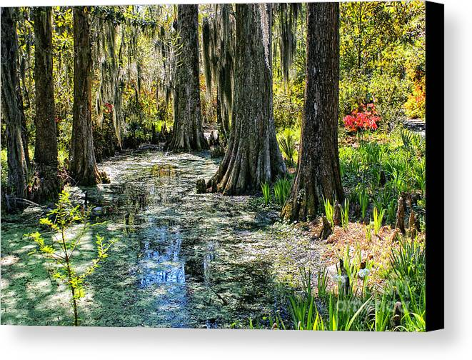 Landscape Canvas Print featuring the photograph Magnolia Gardens by Karl Voss