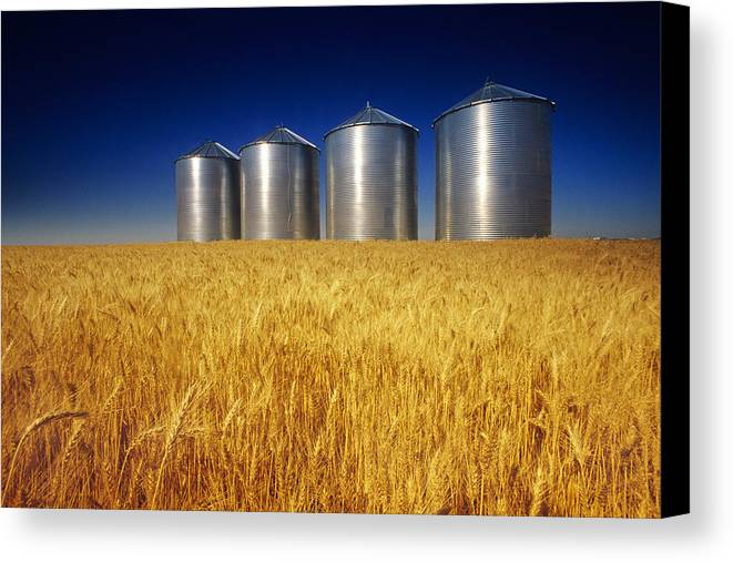 Daytime Canvas Print featuring the photograph Mature Winter Wheat Field With Grain by Dave Reede