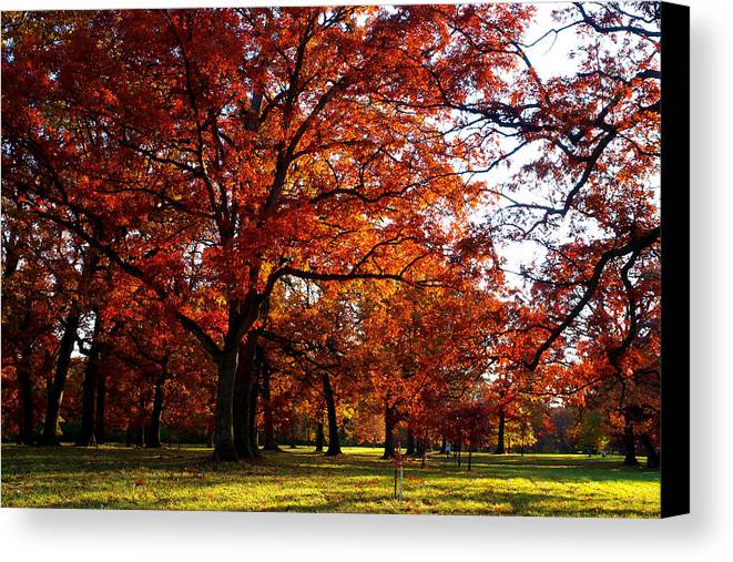 Arboretum Canvas Print featuring the photograph Morton Arboretum In Colorful Fall by Paul Ge