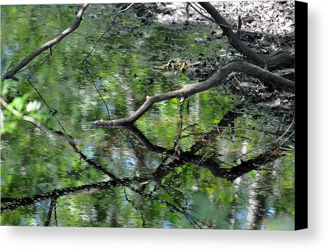 Teresa Blanton Canvas Print featuring the photograph Painting Of The Branches by Teresa Blanton