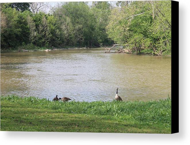 Parents Canvas Print featuring the photograph Parenting Geese 4 by Michael Duncan