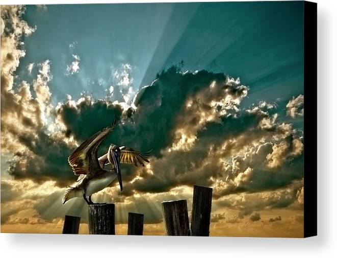 Pelican Canvas Print featuring the photograph Pelican Sky by Meirion Matthias
