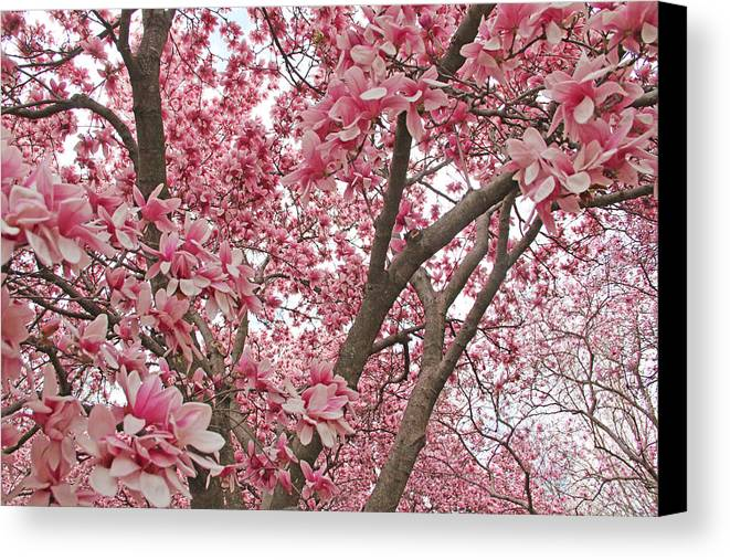Becky Canvas Print featuring the photograph Pink Everywhere by Becky Lodes