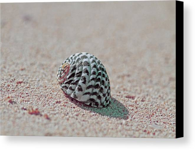 Sand Canvas Print featuring the photograph Pink Sand by Gord Patterson