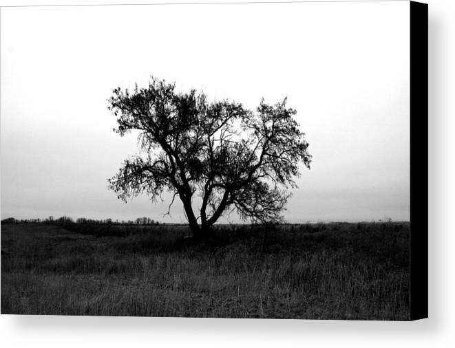 Elm Canvas Print featuring the photograph Prairie Dog by Empty Wall