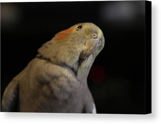Bird Canvas Print featuring the photograph Pretty Bird by Stephanie Ragazzo