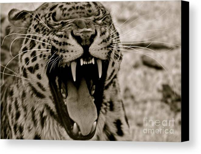 Sepia Canvas Print featuring the photograph Protecting The Young by Eric Chapman