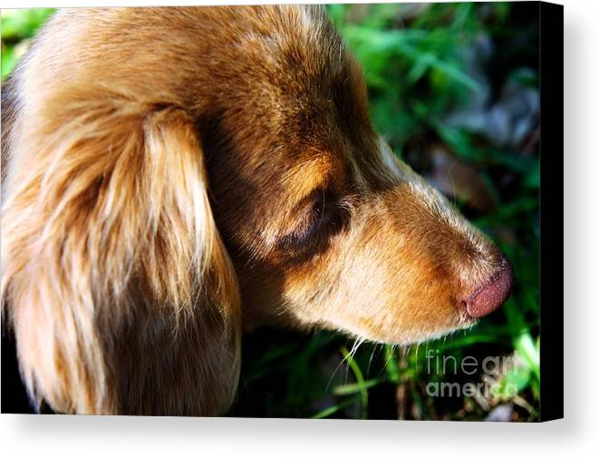 Dog Canvas Print featuring the photograph Puppy by Will Cardoso