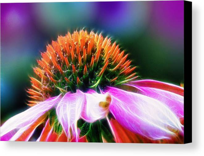Flower Canvas Print featuring the photograph Purple Coneflower Delight by Bill Tiepelman